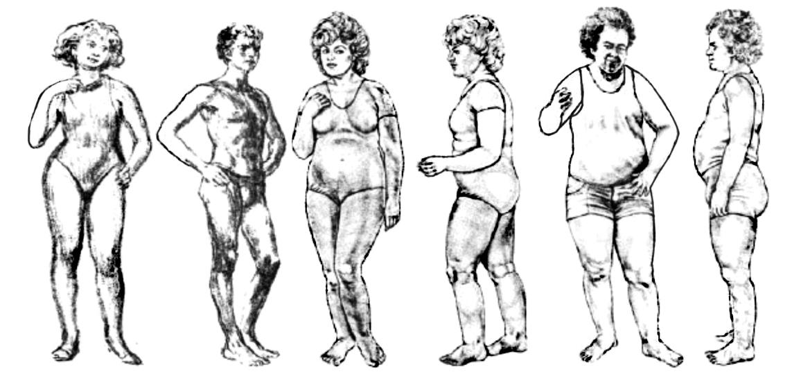 petefészek hormontípus étrend