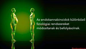 Endocannabinoids-HUN
